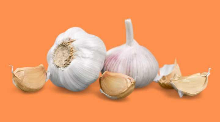 Garlic cloves on orange background